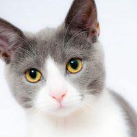 قوة القطط