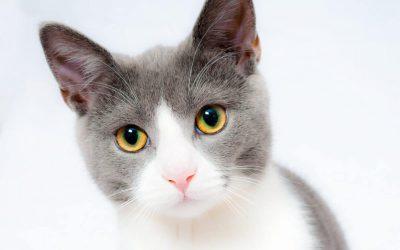 Magie der Katzen